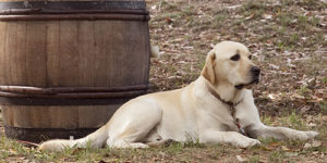 Dog Point dog1