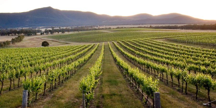 Grampians vineyard