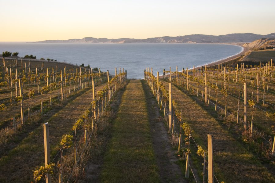 Awatere Valley vineyard at dawn