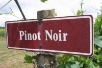 Pinot Noir sign