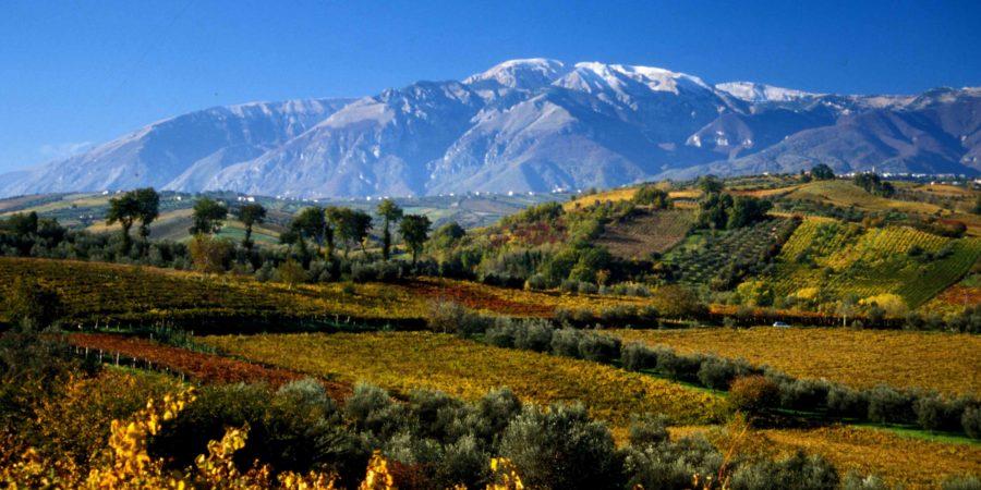 Farnese vineyards