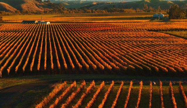 Trinity Hill vineyards