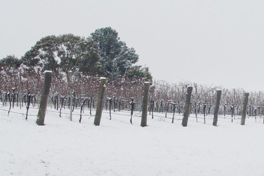 Hatherleigh Vineyard
