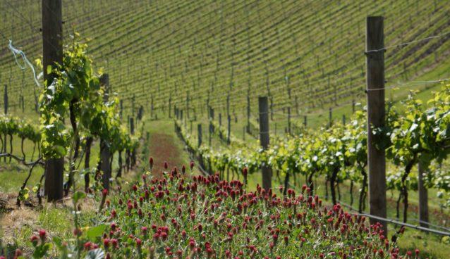 Clyde Park College Block-F vineyard