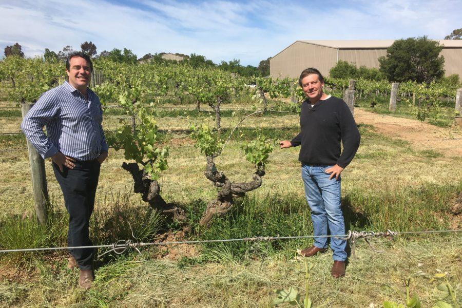 James & Paul Lindner with the 1843 vines at Langmeil