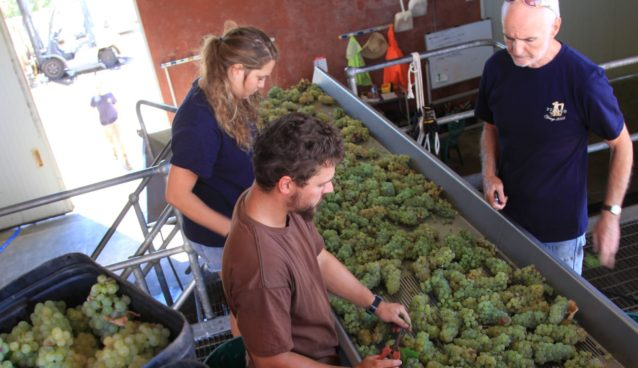 Mike Peterkin (right) at work in the Pierro winery.